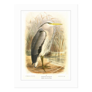 Common Heron Postcard