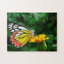 Common Jezebel Butterfly. Jigsaw Puzzle