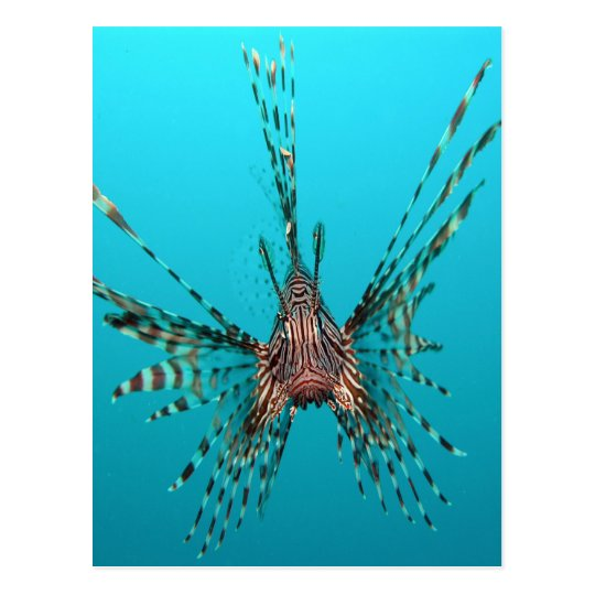 Common lionfish freedom peace and joy postcard