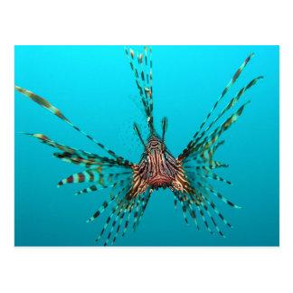 Common Lionfish Pterois Volitans Postcard