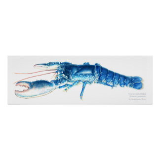 Common lobster blue watercolour art print large