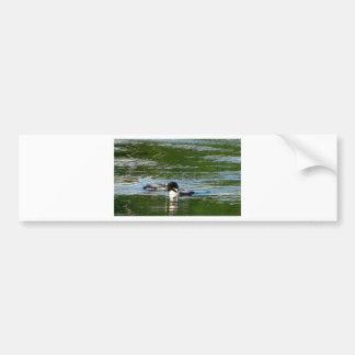 Common Loon Bumper Sticker