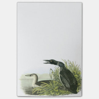 Common Loon by Audubon Post-it® Notes
