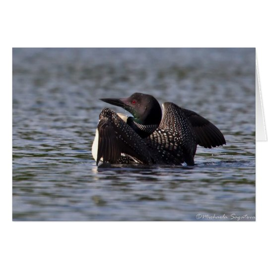 Common Loon Card