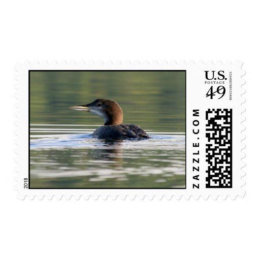 Common Loon chick Postage Stamps