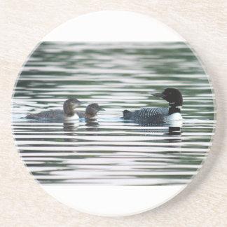 Common Loon Chicks Coaster