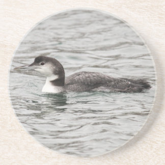 Common Loon Drink Coasters