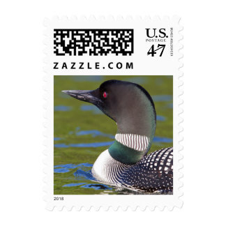Common loon in water, Canada Postage