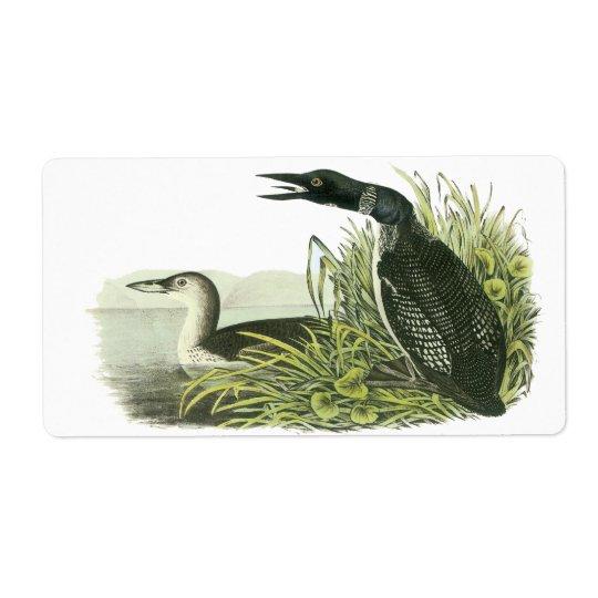 Common Loon, John Audubon Label