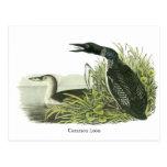 Common Loon, John Audubon Post Cards