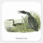 Common Loon, John Audubon Square Stickers