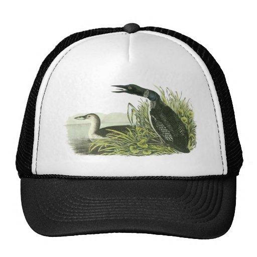 Common Loon, John Audubon Trucker Hat