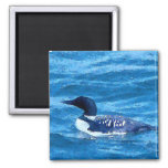 Common Loon Magnet
