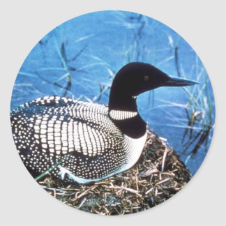 Common Loon on Nest Classic Round Sticker