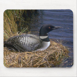 Common Loon on nest Mouse Pad