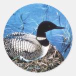 Common Loon on Nest Sticker
