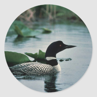 Common Loon on Water Classic Round Sticker