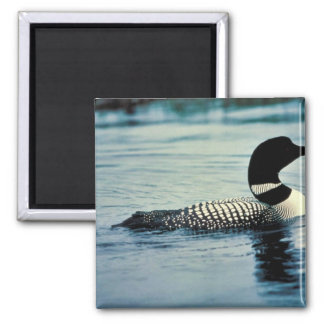 Common Loon on Water Refrigerator Magnets