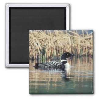 Common Loon on Water Refrigerator Magnet