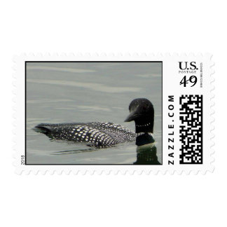 Common Loon Stamp
