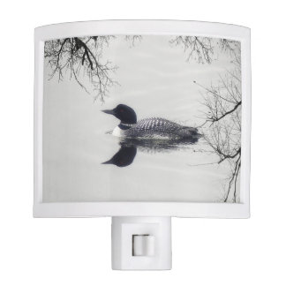 Common Loon Swims in a Northern Lake in Winter Night Light