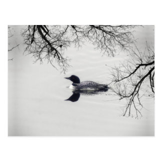Common Loon Swims in a Northern Lake in Winter Postcard