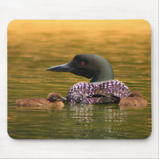 Common Loon with 2 Chicks Mouse Pad