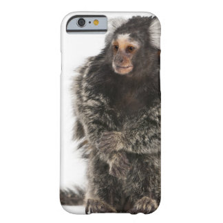 Common Marmoset - Callithrix jacchus (2 years Barely There iPhone 6 Case