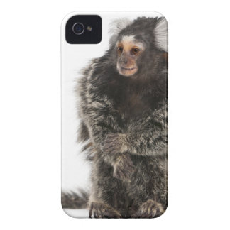 Common Marmoset - Callithrix jacchus (2 years iPhone 4 Cover