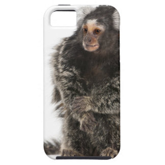 Common Marmoset - Callithrix jacchus (2 years iPhone SE/5/5s Case