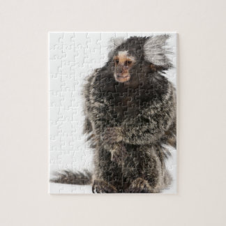 Common Marmoset - Callithrix jacchus (2 years Jigsaw Puzzle