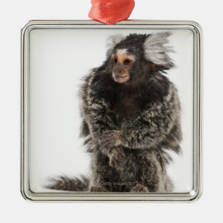 Common Marmoset - Callithrix jacchus (2 years Metal Ornament