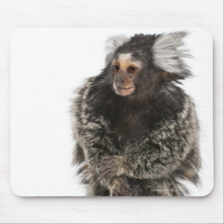 Common Marmoset - Callithrix jacchus (2 years Mouse Pad