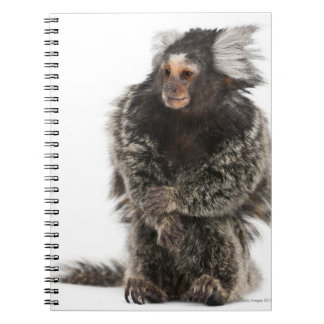 Common Marmoset - Callithrix jacchus (2 years Notebook
