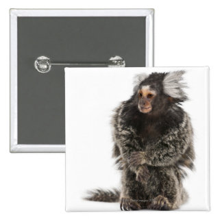 Common Marmoset - Callithrix jacchus (2 years Pinback Button