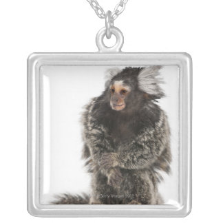 Common Marmoset - Callithrix jacchus (2 years Silver Plated Necklace