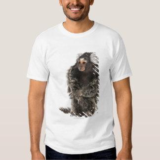 Common Marmoset - Callithrix jacchus (2 years T-Shirt