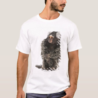 Common Marmoset - Callithrix jacchus (2 years T-Shirt