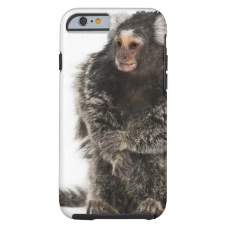 Common Marmoset - Callithrix jacchus (2 years Tough iPhone 6 Case