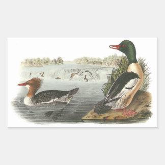 Common Merganser by Audubon Rectangular Sticker