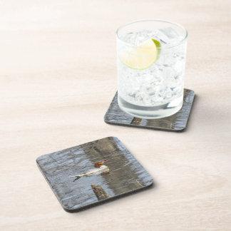 Common Merganser Beverage Coaster