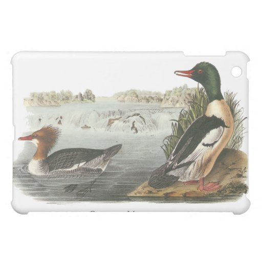 Common Merganser, John Audubon Case For The iPad Mini