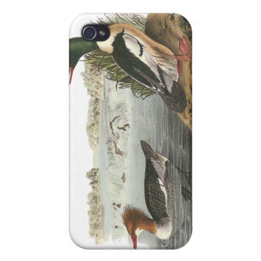 Common Merganser, John Audubon iPhone 4/4S Cases