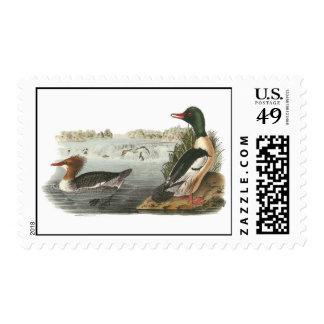 Common Merganser, John Audubon Postage