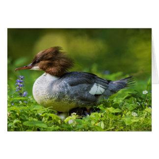 Common Merganser On Chicks Card