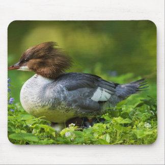 Common Merganser On Chicks Mouse Pad