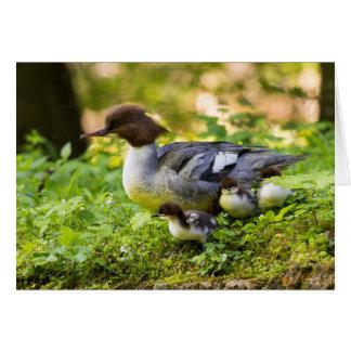Common Merganser With Chicks Card
