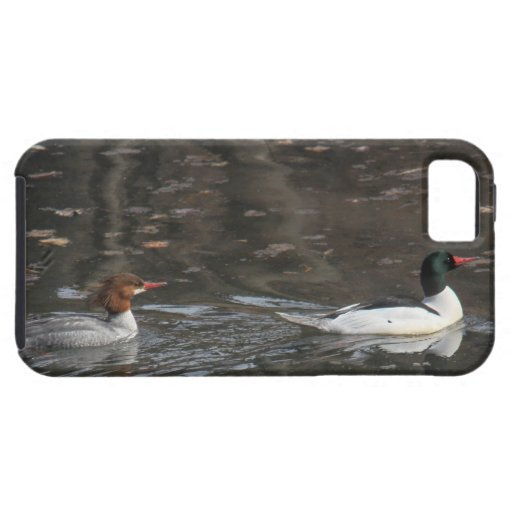 Common Mergansers iPhone 5/5S Cover
