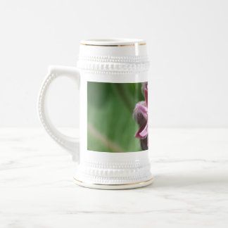 Common milkweed bud with leaves in background beer stein