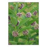 Common milkweed greeting cards